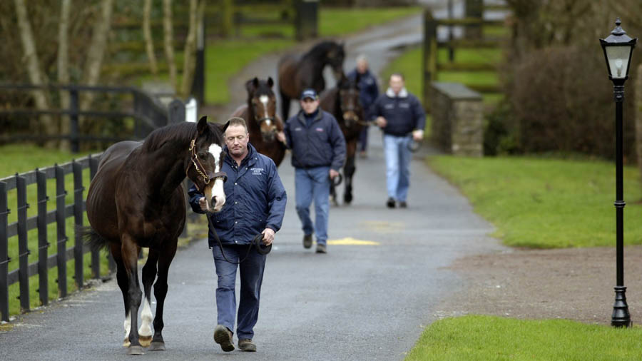 coolmore stallions
